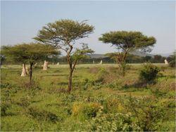 Termite landscape 2