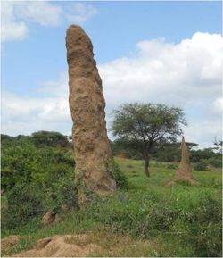 Termite hill 2