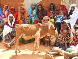 Women and cow 2