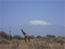 VAC Kili and giraffe 2